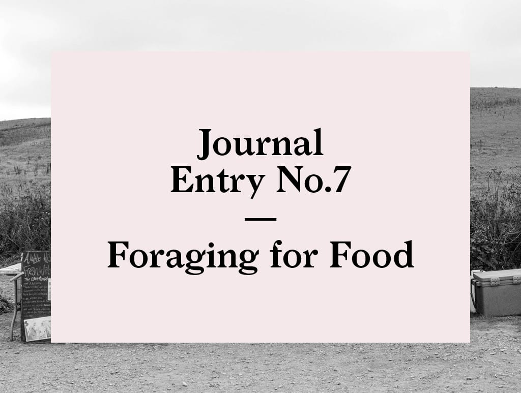 Foraging for Food in Wales | Bearleader No.7-02
